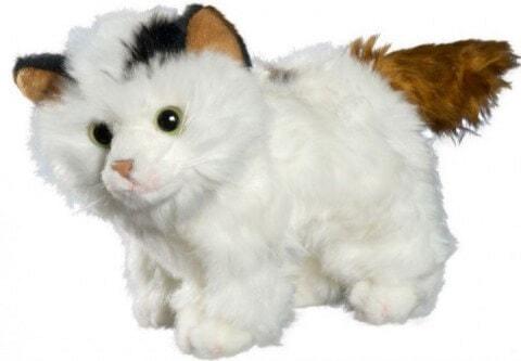 Die liebe Penya Katze