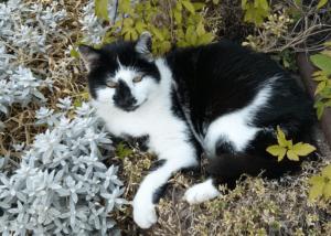 Minka, die beste Katze der Welt