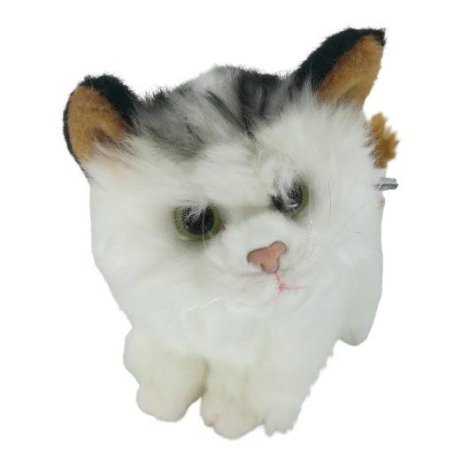 Frech dreinblickende Katze