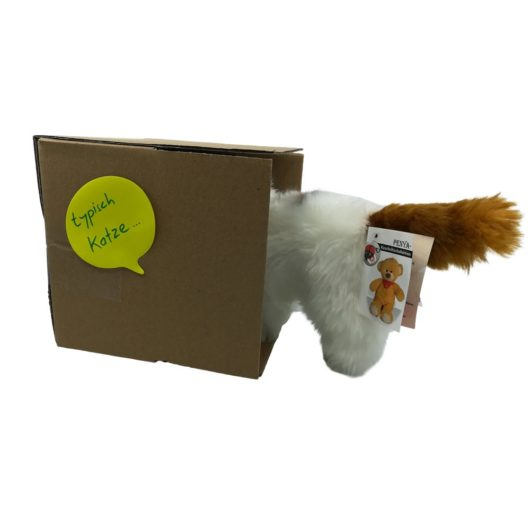Katze inspiziert einen Karton