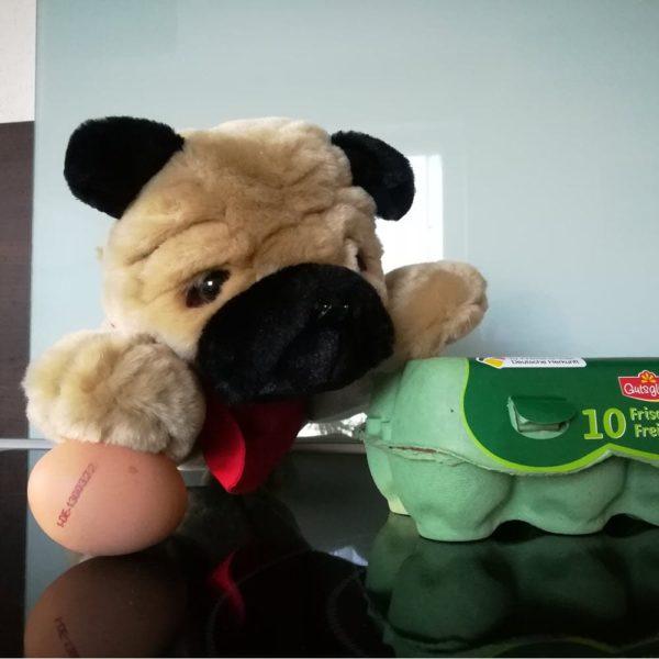 Ein Mops in der Küche mit einem Ei