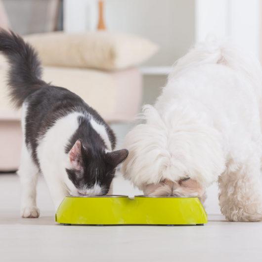 Hund und Katze fressen Penyang Futtermittelzusatz