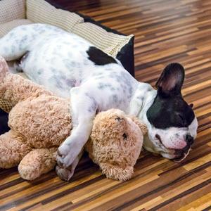 Hund mit Penya Plüschtier